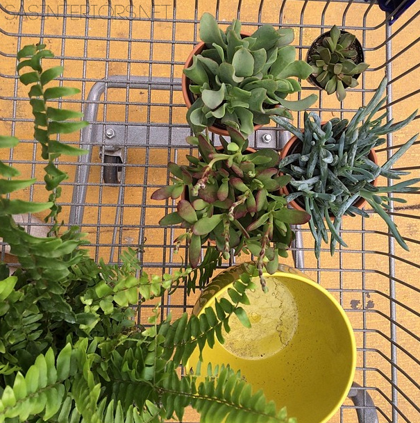Succulent Shopping