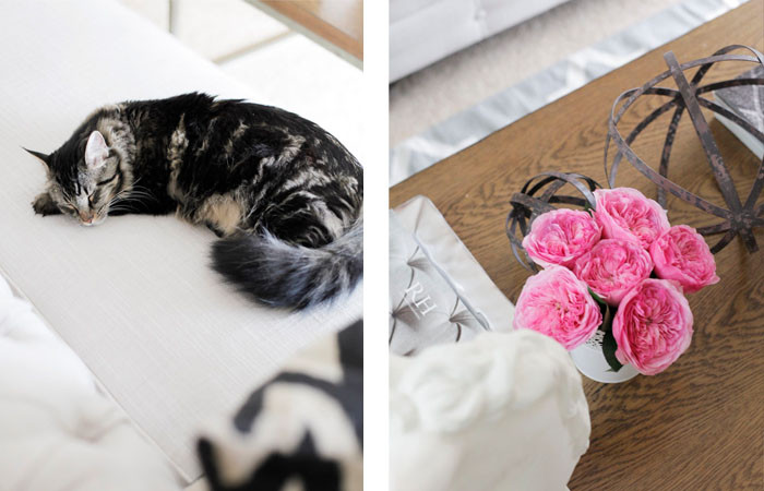 Coffee table chic... + a cute cat